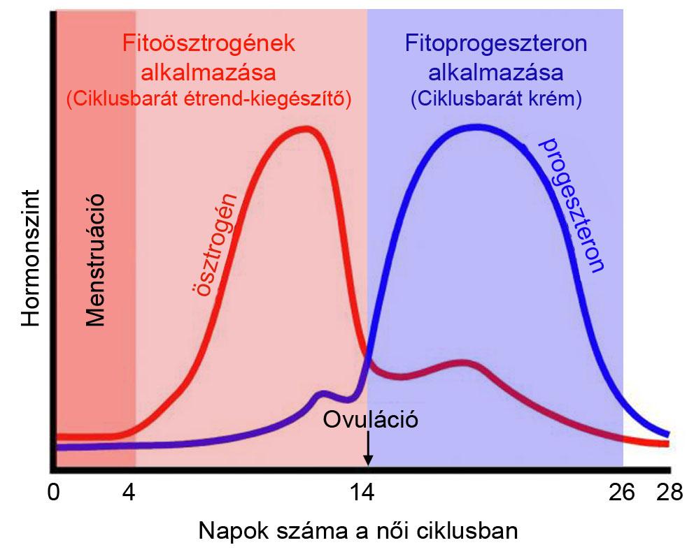 a természetes progeszteron okoz-e fogyást hogyan lehet eltávolítani a gyors hasi zsírt