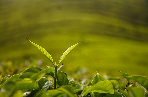 mi a legjobb fogyókúrás tea fogyás tippek és tippek