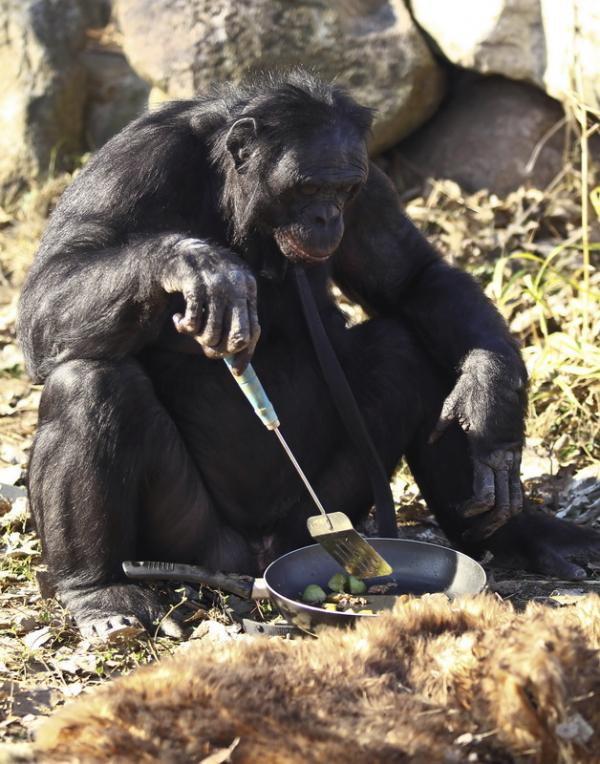 majom fogyni