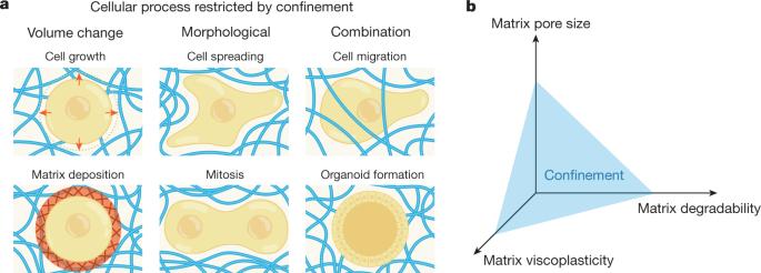 mátrix karcsúsított lipid