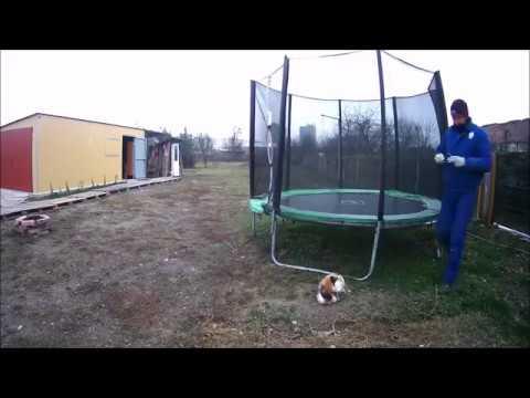 hogyan lehet zsírégetni egy trambulinon)