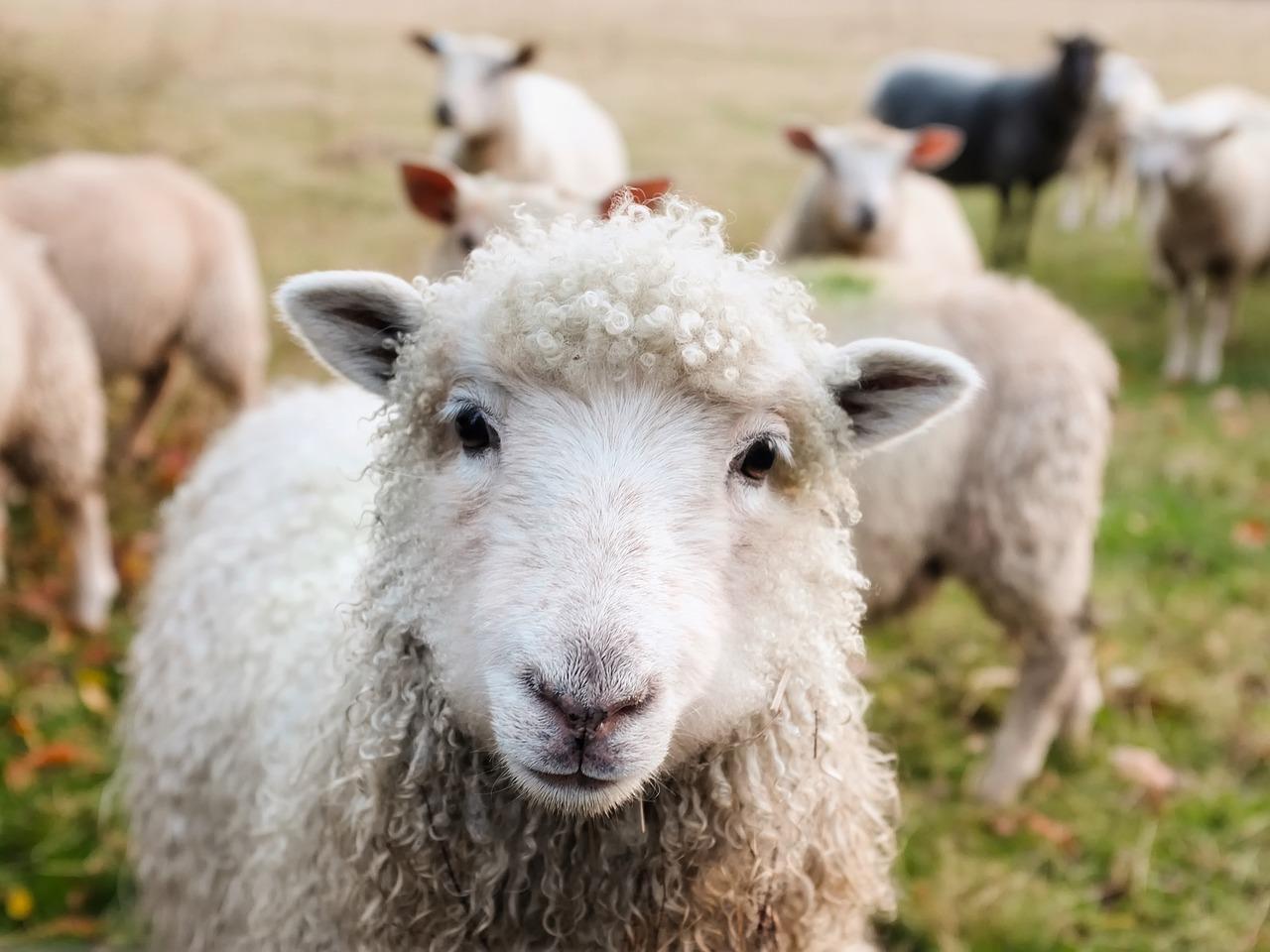 juhok fogyása okozza