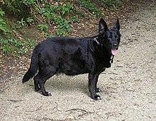 kutya cushing fogyása fogyókúra növelők